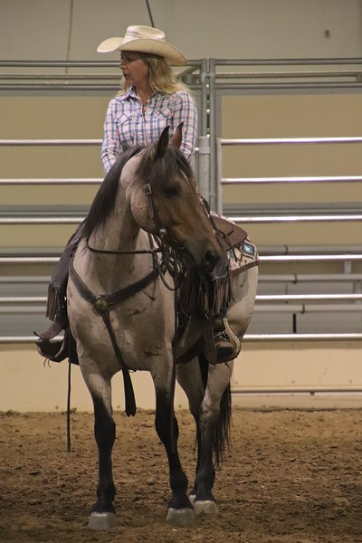 Ken's Wyoming Mustang Show 2018