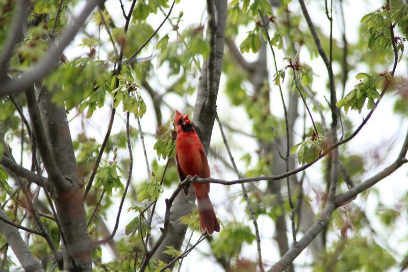 Cardinals April