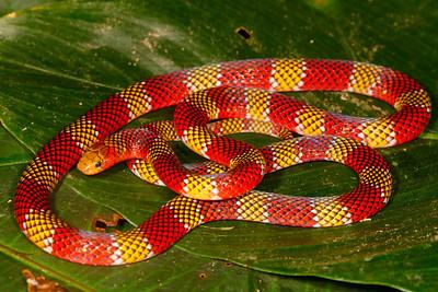 Peru Amazon 2014