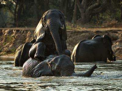 Zambia Safari 2006