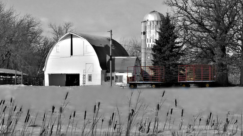 WHITE BARN WITH RED WAGONS