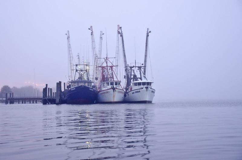 Cumberland Island-65.jpg