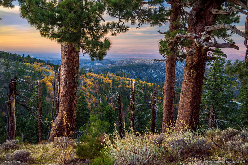 Fall_Color_Sunset_Through_Pines_San_Gabriel_Mountains_California_DSC3210-2.jpg