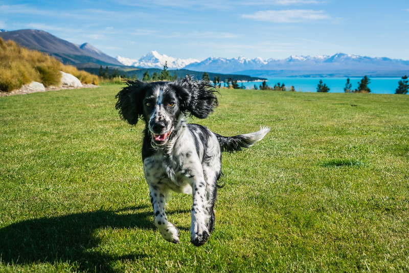 dog-jump-mt-cook-lakeside-retreat-new-zealand.jpg