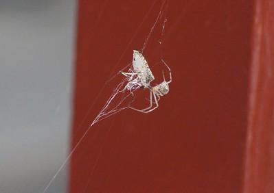 Spider, Web, Rosemount Camping Resort, Tamaqua (9-20-2014)