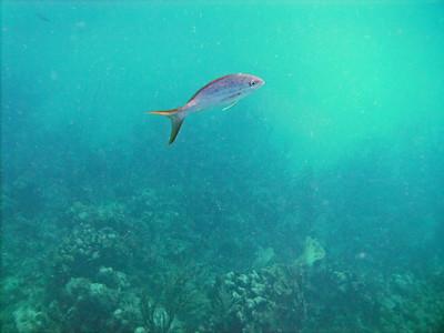 Culebra Snorkel and Scuba Carlos Rosario, Luis Pena Canal with Culebra Divers