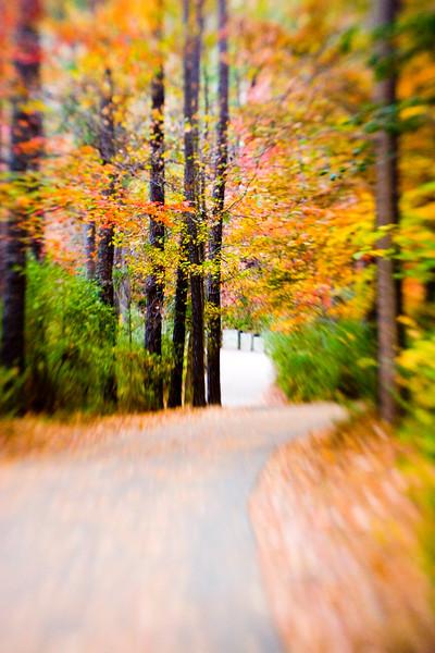 Walk_This_Way.jpg