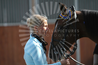 HORSES RACING -COURSES