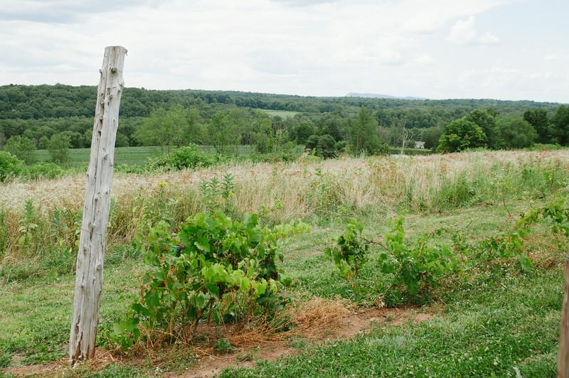 vineyard-0673.jpg