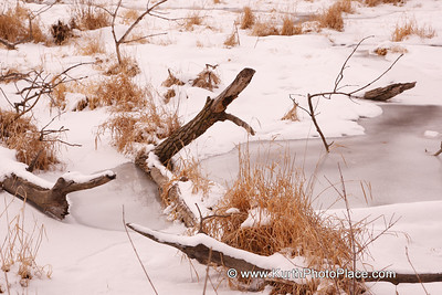 Fontenelle Forest - January 20, 2008