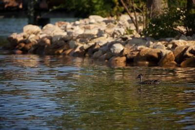 Smith Mtn. Lake Scenery 2014