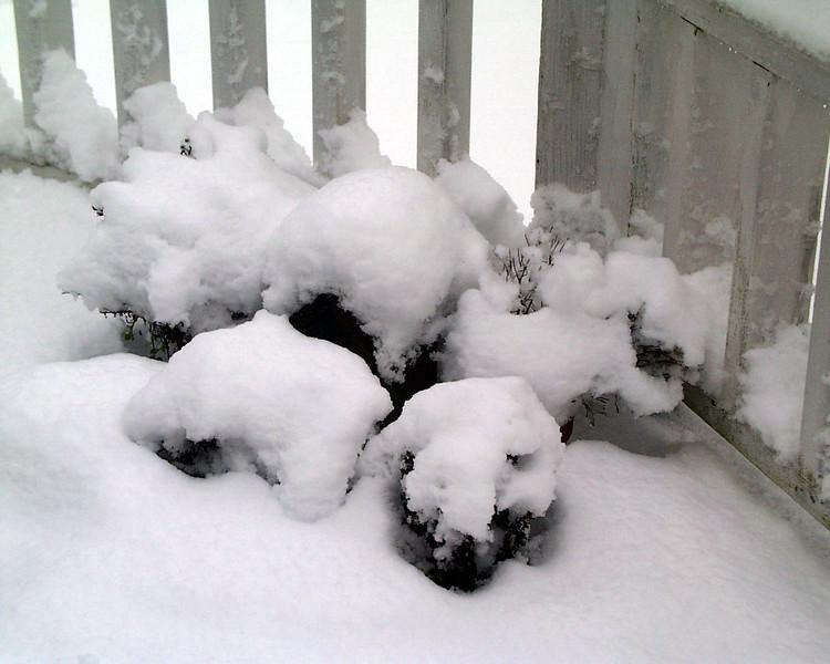 1-30-2002-snow#16.jpg