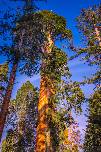 Visiting Sequoia and Kings Canyon National Parks