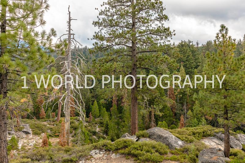 San Fran_Lake Tahoe Trip 2017-1569-92.jpg