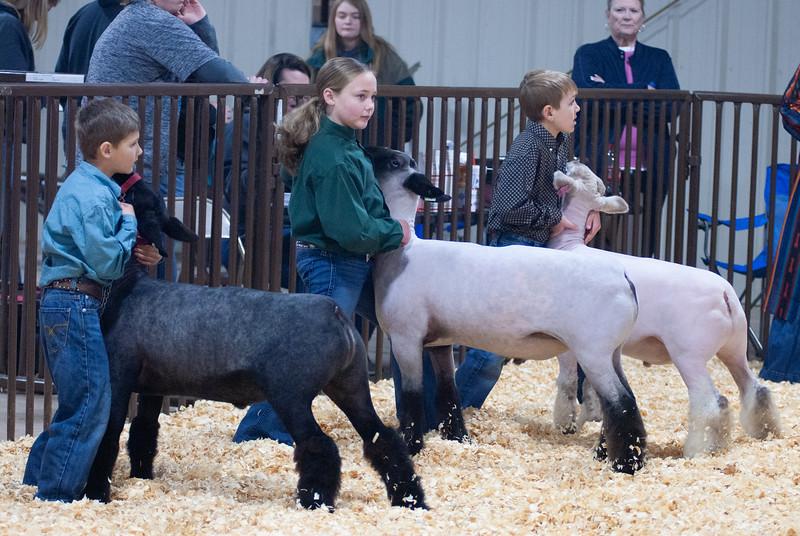 kay_county_showdown_sheep_20191207-8.jpg