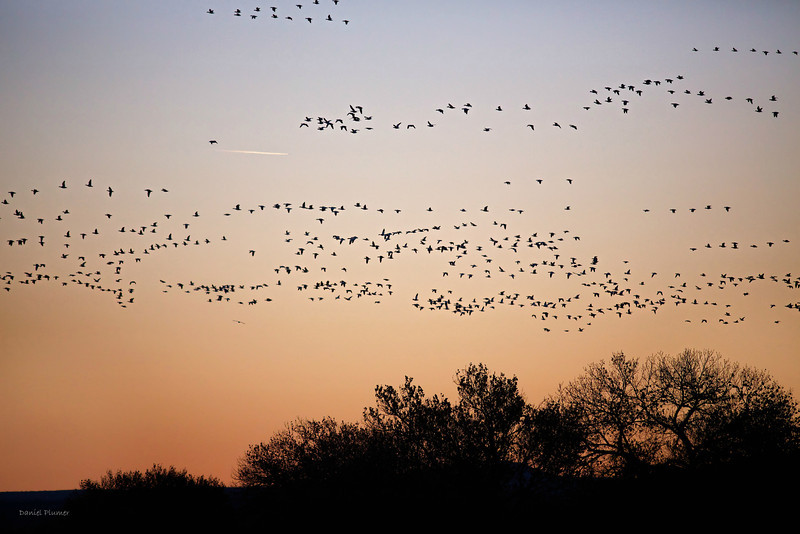 Bosque Del Apache Sunrise