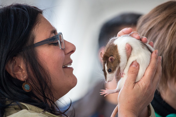 6 December 2015 4th Panhellenic Rodent Show