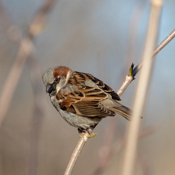 Montrose Bird Sanctuary