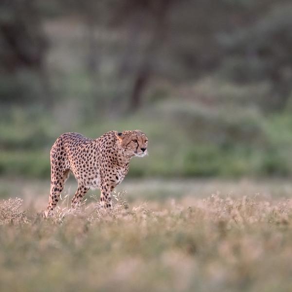 Tanzania_Feb_2018-119.jpg
