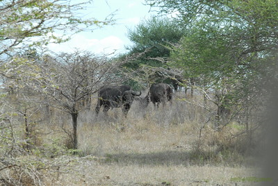 Selous National Park 2008