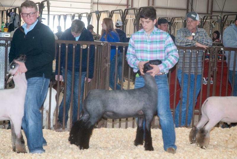 kay_county_showdown_sheep_20191207-107.jpg