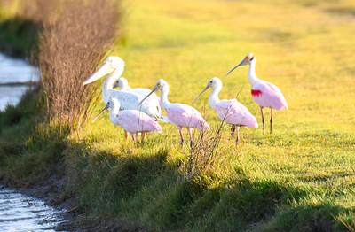Llano Grande Birds