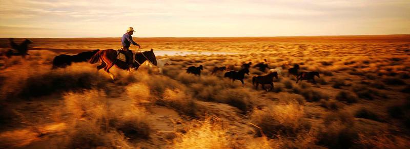 Cattle Drive 19 resize .jpg