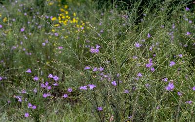 Wildflowers Around Perry