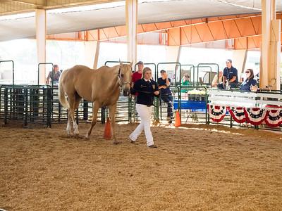 150703 FFA HORSE SHOWMANSHIP (ALAMEDA COUNTY FAIR)