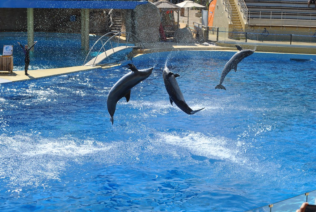 Why Swimming With Dolphins Is Bad