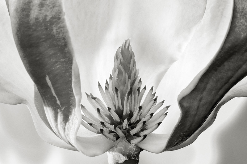 magnolia-11.jpg