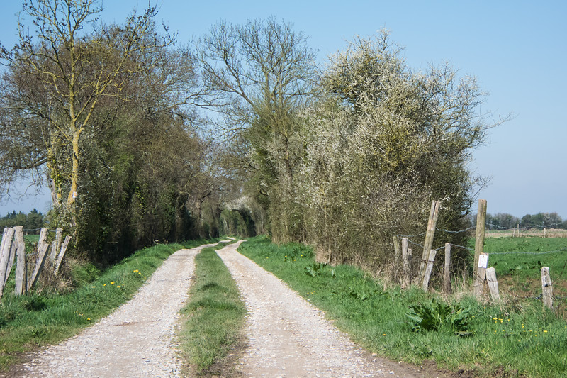 Typical hedgerow which slowed down the invasion