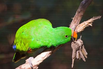 KC Zoo 06