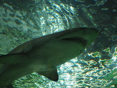 Sydney Aquarium April 2021