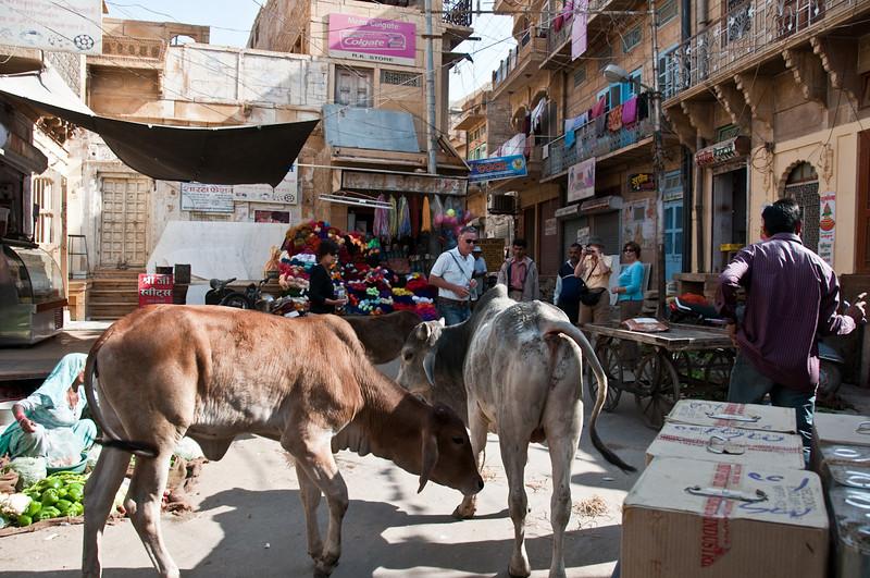 POW Day 5-_DSC3494- Jaisalmer.jpg