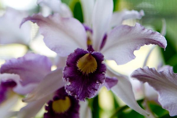 Redland Orchid Festivals 2011