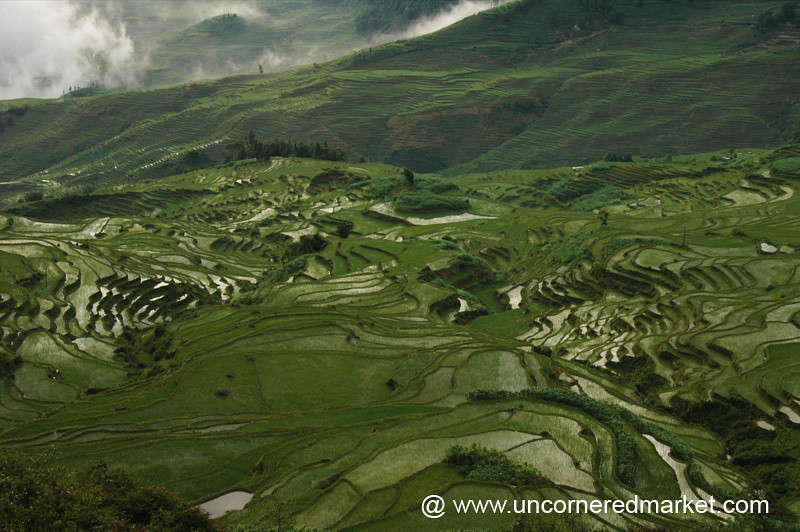 Yuanyang Rice Terraces - Yuanyang, China