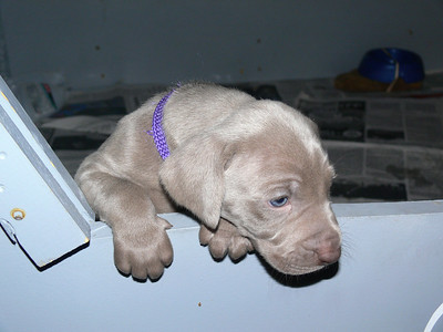 Puppies '07 , round two