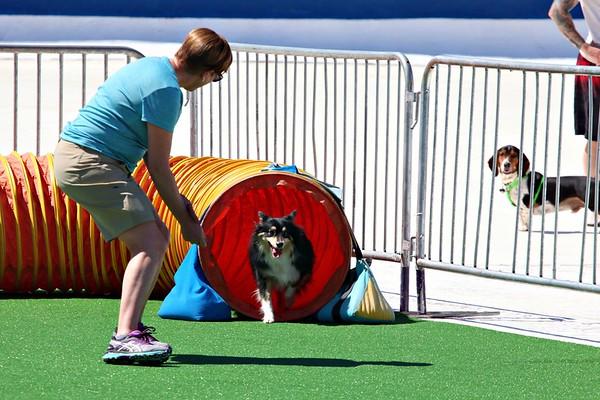 Poochfest 2019 Dog Agility