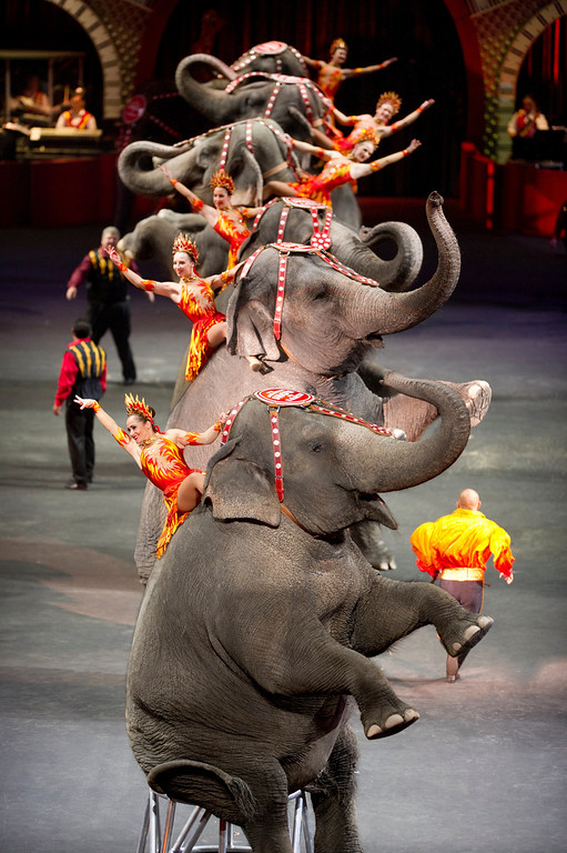". The elephant act from Ringling Bros. and Barnum & Bailey\'s latest circus production, ""Built to Amaze,\"" which plays the Denver Coliseum Oct. 3-6 and the Pepsi Center Oct. 9-13."