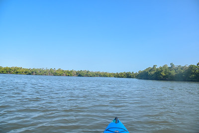 9AM Mangrove Tunnel Kayak Tour - Isles of Collier Preserve
