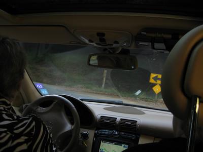 2011/10/09-1 - Muir Woods II