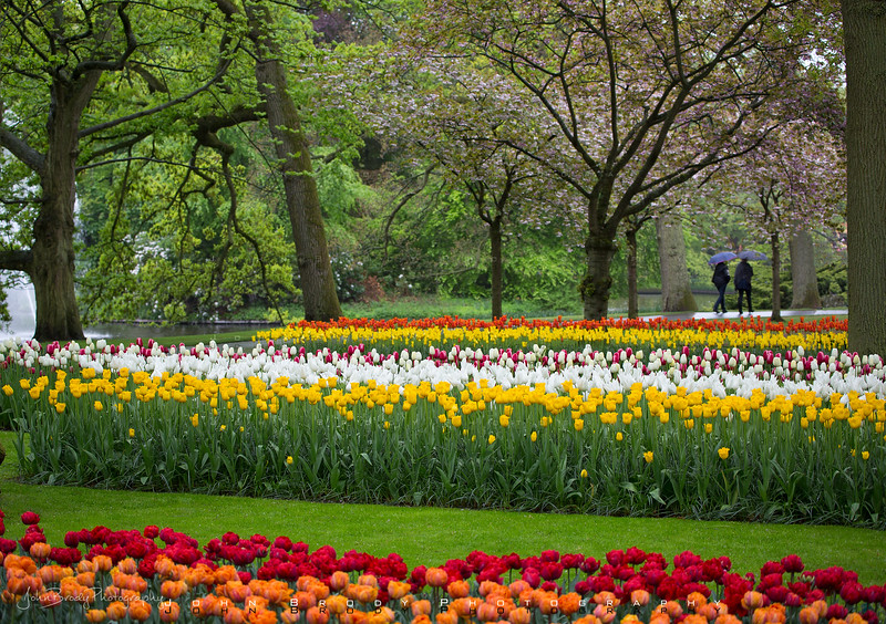 Keukenhof Tulip Gardens in South Holland in the small town of Lisse. A beautiful location a short drive southwest of Amsterdam - John Brody Photography - JohnBrody.com