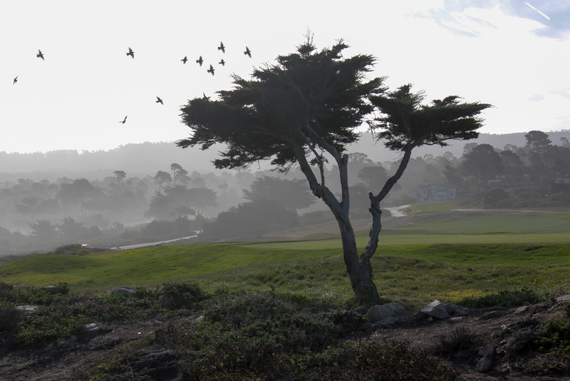 Cali Monterey 2013 Final-6197.jpg