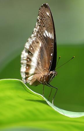Butteryfly Zoo, Colorado
