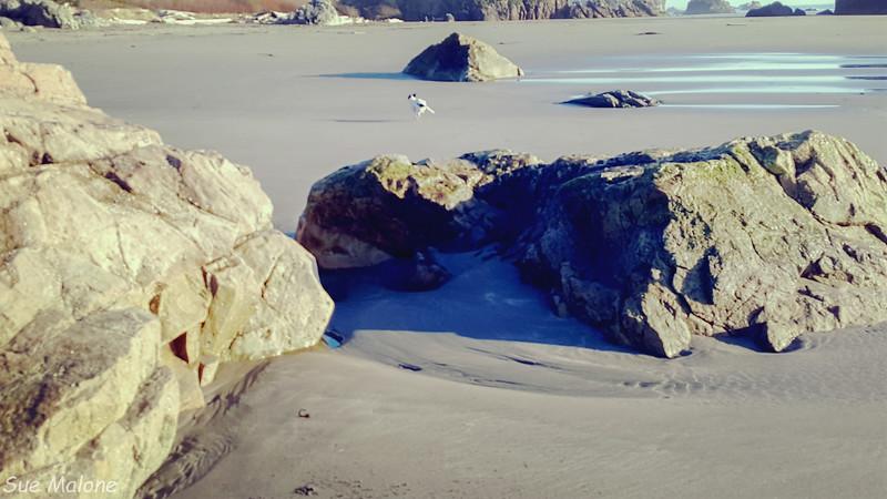Harris Beach Afternoon-3.jpg