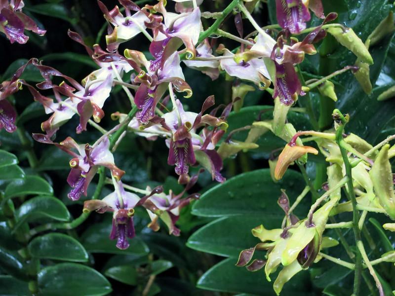 1724 Orchid Garden.jpg