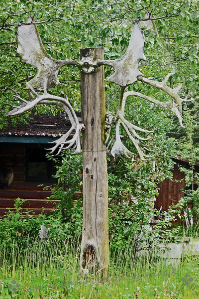 The Antler Pole