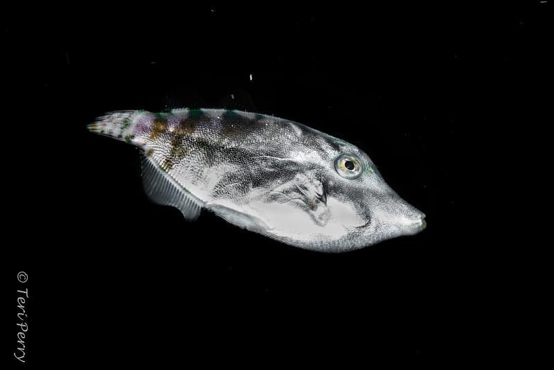 BLACKWATER - FISH - -0120-Edit.jpg