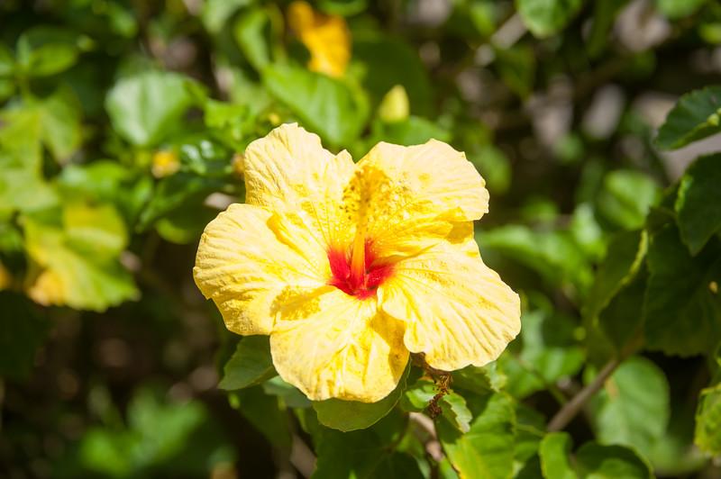 Maui_20181024_175137-830.jpg